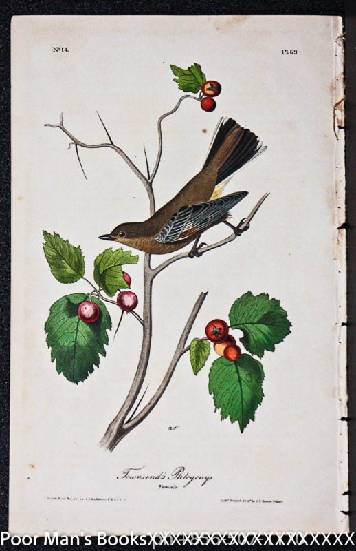 Image for PL. 69 TOWNSEND'S PTILOGONYS (FEMALE) THE BIRDS OF AMERICA,1840