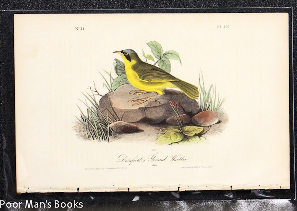 Image for DELAFIELD'S GROUND WARBLER [AUDUBON 1840 OCTAVO]