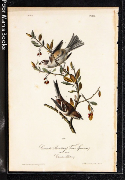 Image for CANADA BUNTING TREE SPARROW [AUDUBON 1840 OCTAVO]