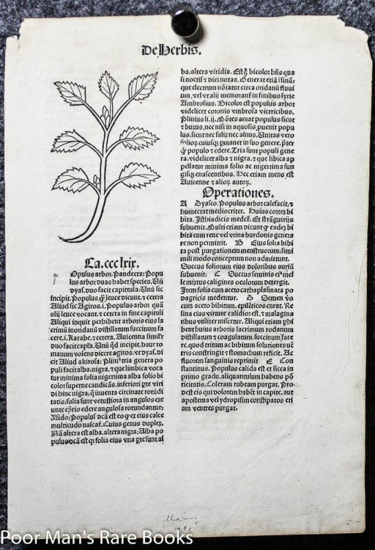 Image for HORTUS SANITATUS INCUNABLE LEAF 1491 TWO WOODCUTS OF HERBS