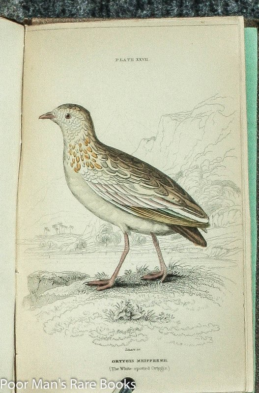 Image for NATURALIST'S LIBRARY: ORNITHOLOGY VOL IV